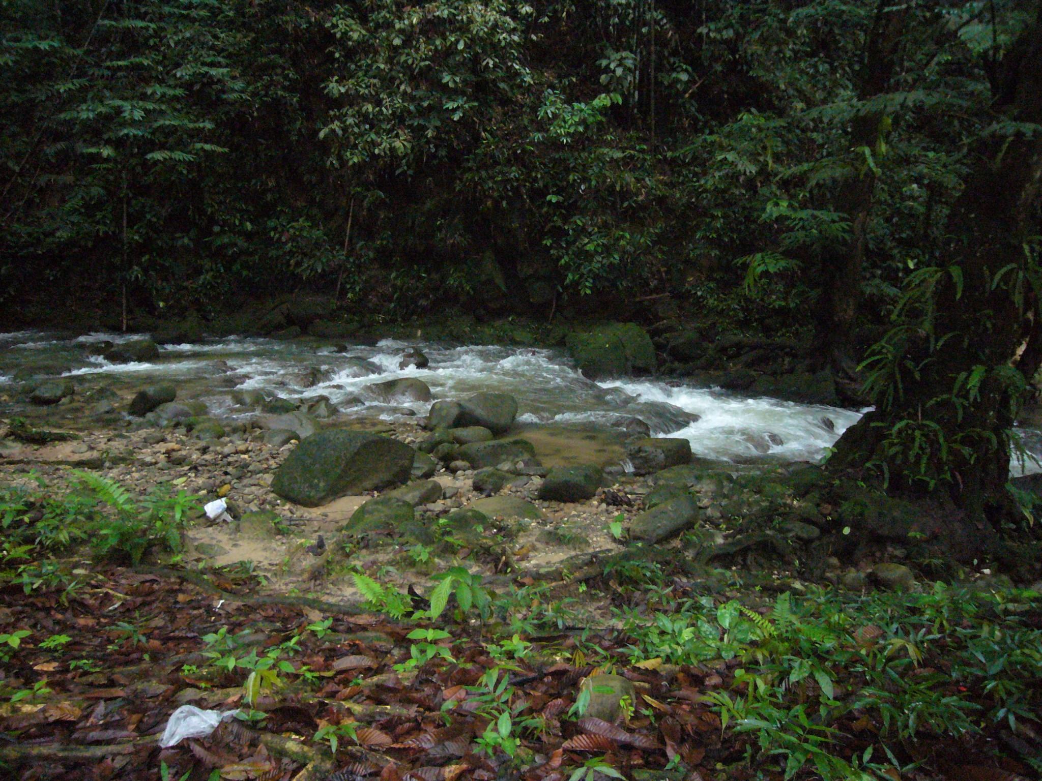 the stream...
